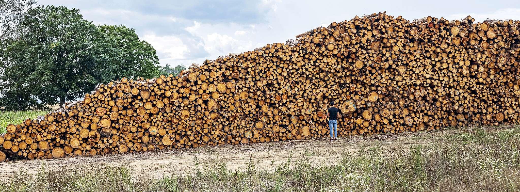 České lesy usychají. Jak je zachránit?